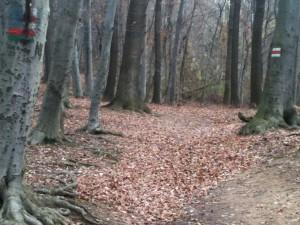 Bäume mit Markierungen im Wienerwald