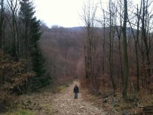 Unterwegs im Wienerwald