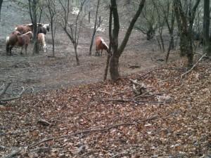 Pferde bei der Rieglerhütte
